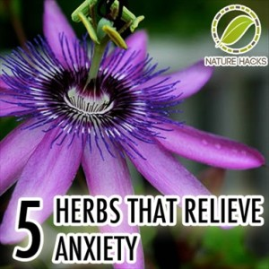 5 Herbs That Naturally Relieve Anxiety