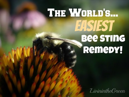 The World's Easiest Bee Sting Remedy!