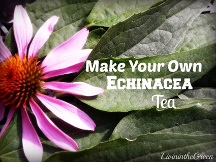 How to Make Your Own Echinacea Tea