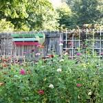 DIY Pallet Art In My Garden & Garden Photos