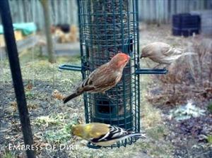 DIY Birdseed Scooper Duper
