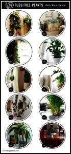 Fuss-Free Plants that Clean the Air