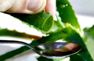 40 Amazing Uses for Aloe Vera!