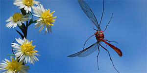 How to Attract Helpful Insects to Your Garden