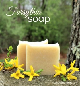 How to Make Forsythia Soap