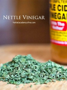 Stinging Nettle Recipes for the Spring