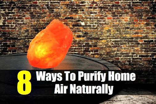 8 Ways To Purify Home Air Naturally